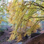 Camping in Holland im Herbst - Natur