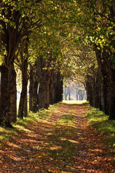 Waldpfad lädt zum Spaziergang mit dem Hund ein