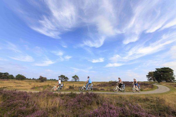Camping in der Veluwe - Radfahren durch das Nationalpark Hoge Veluwe